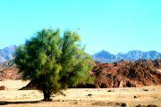 Rundfahrt durch die westliche Wüste 7 Tage